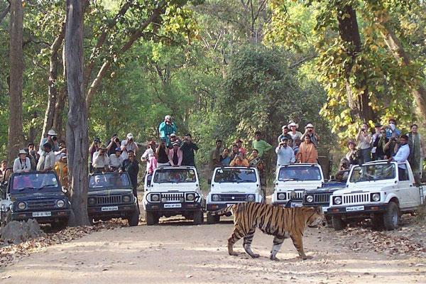 bandhavgarh-tiger.jpg