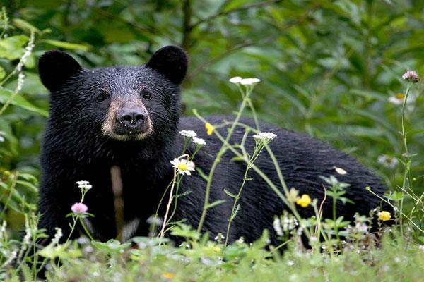 daroji-sloth-bear-2.jpg