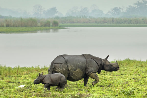 kaziranga-rhino.jpg