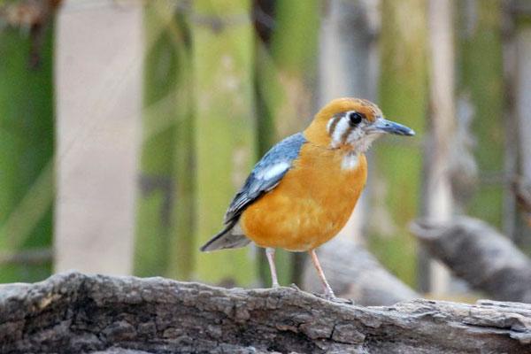 tadoba-bird.jpg